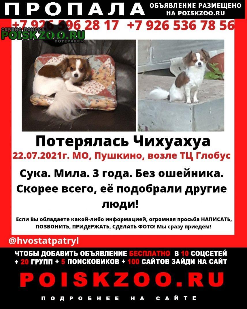 Пропала собака тц глобус пушкино Сергиев Посад