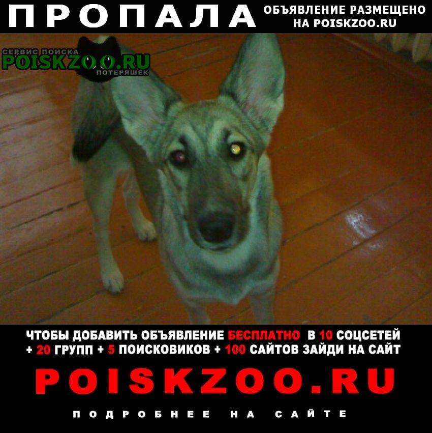 Пропала собака Волгодонск