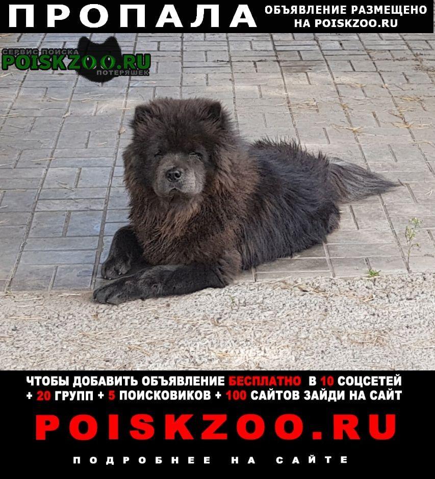 Пропала собака кобель Набережные Челны