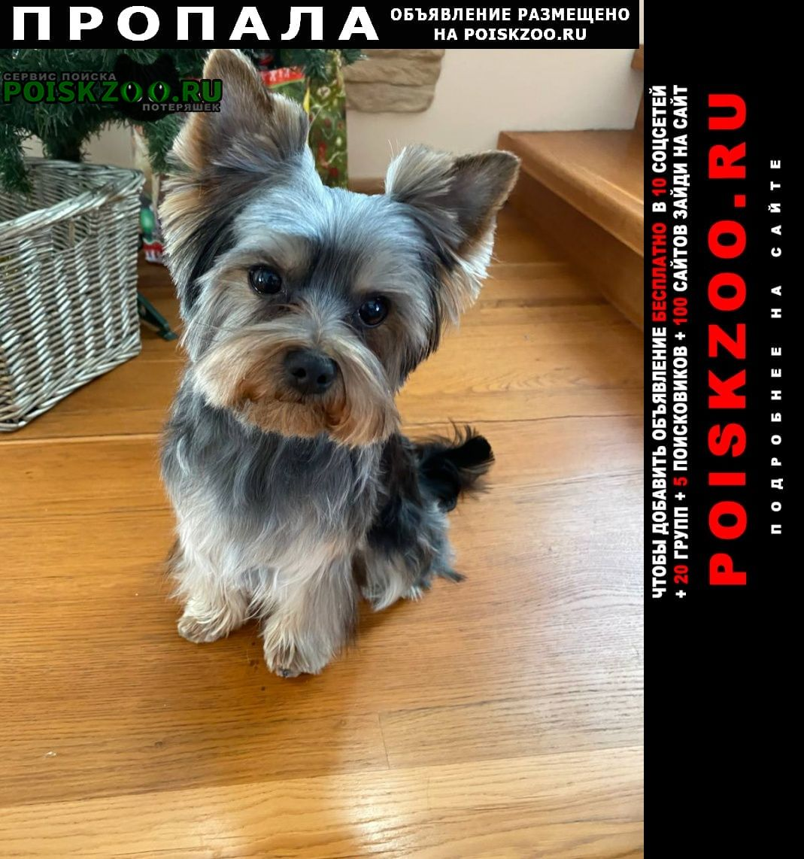 Пропала собака Тюмень