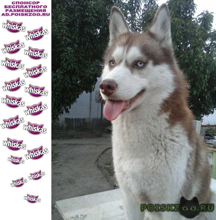 Пропала собака г.Волгоград