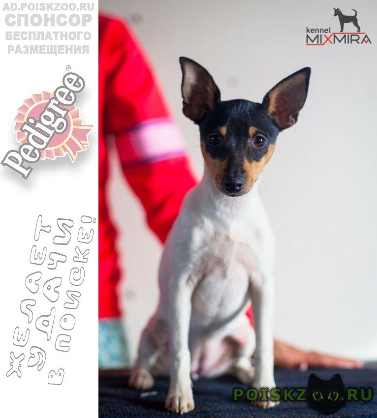 Пропала собака. г.Челябинск