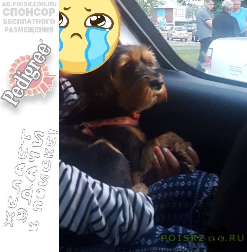 Пропала собака помогите ищу собаку г.Москва