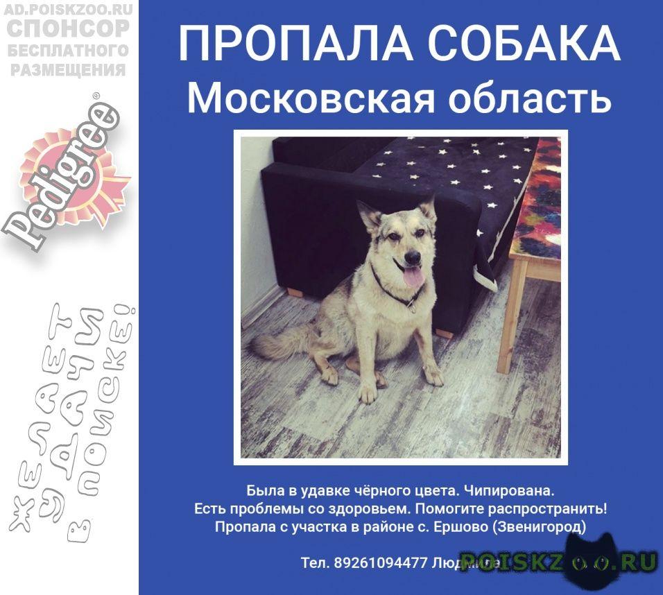 Пропала собака, ершово г.Звенигород