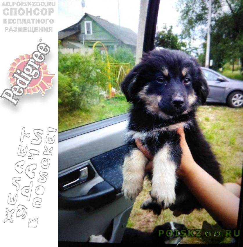 Пропала собака ищем щенка немецкой овчарки г.Москва