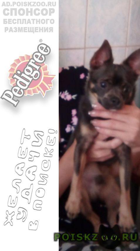 Пропала собака кобель в районе ул. черкасская г.Краснодар