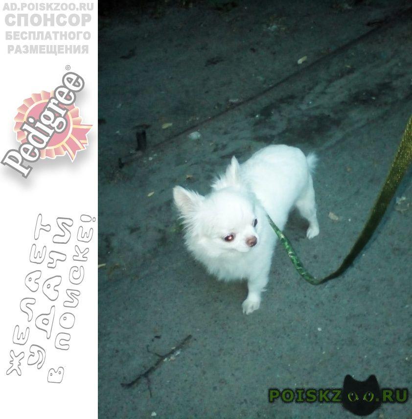 Пропала собака кобель помогите найти. г.Брянск