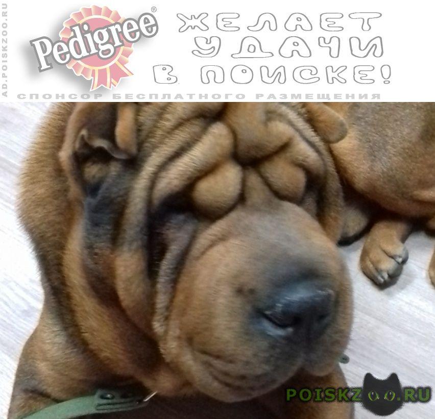 Пропала собака кобель на тулака г.Волгоград