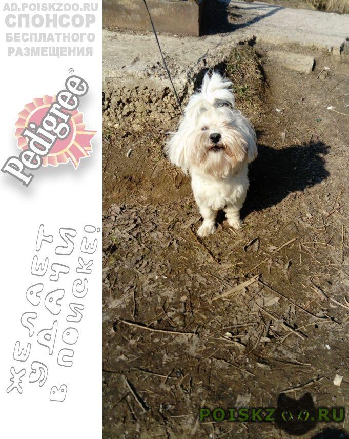 Пропала собака кобель болонка белая г.Мытищи