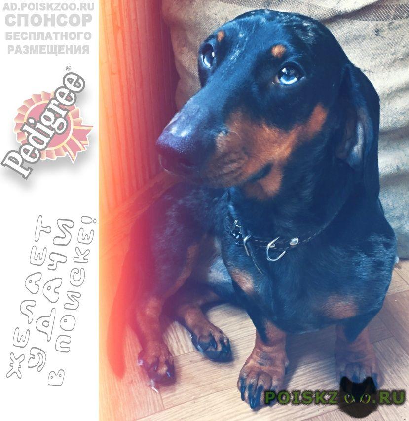 Пропала собака кобель помогите найти  г.Иркутск