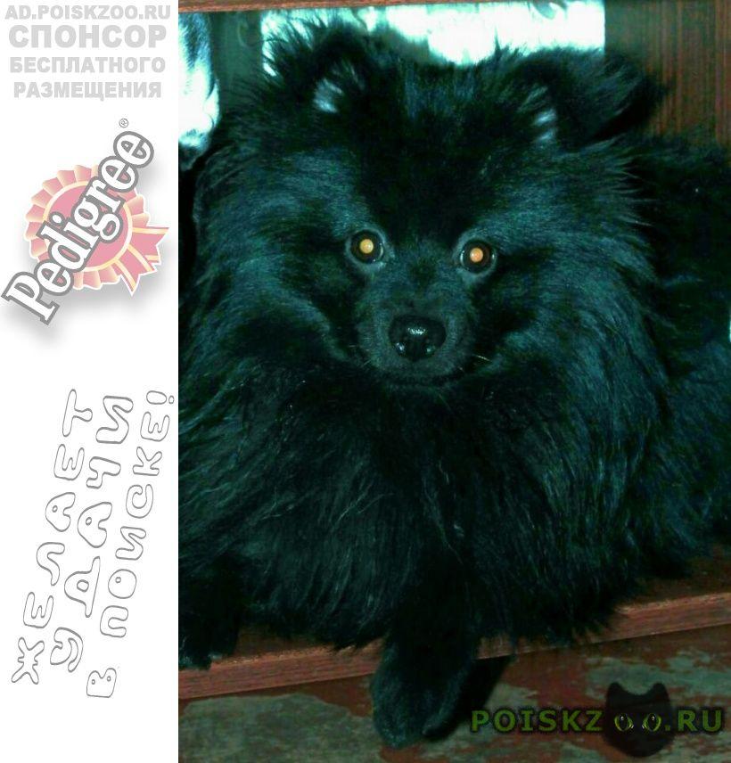 Пропала собака кобель г.Дорохово