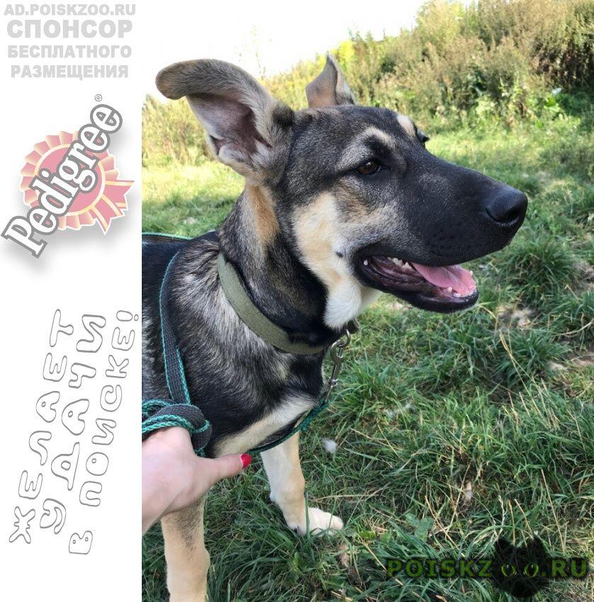 Пропала собака кобель щенок, метро селигерская г.Москва