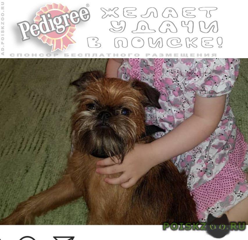 Пропала собака кобель молодой г.Пушкино