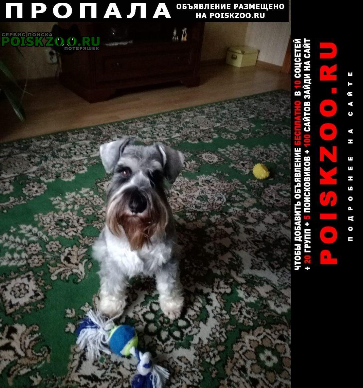 Пропала собака Витебск