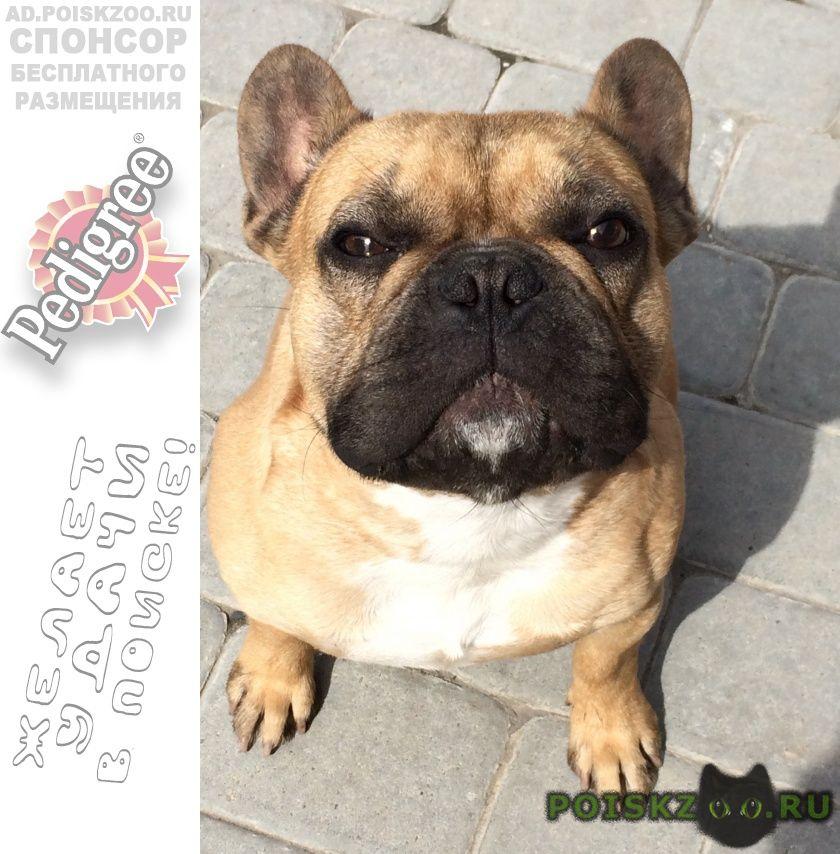 Пропала собака кобель г.Белгород