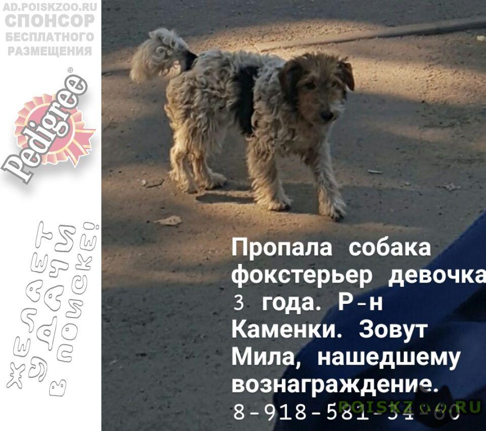 Пропала собака фокстерьер девочка г.Ростов-на-Дону