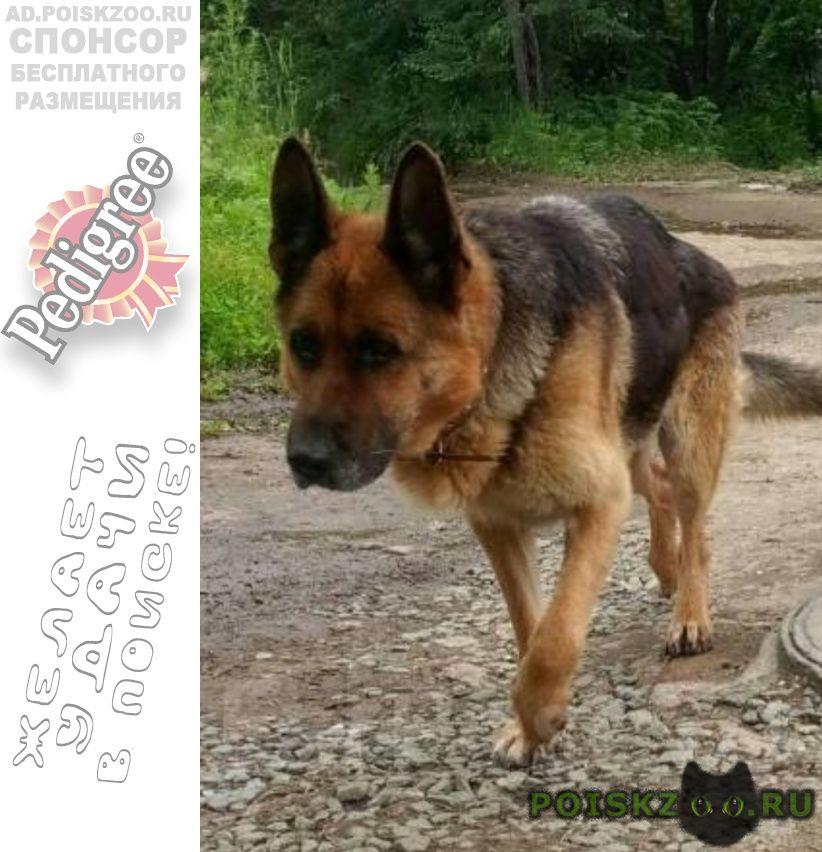 Пропала собака г.Владивосток
