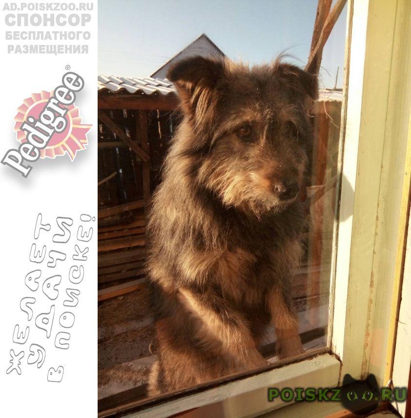 Пропала собака кобель г.Чита