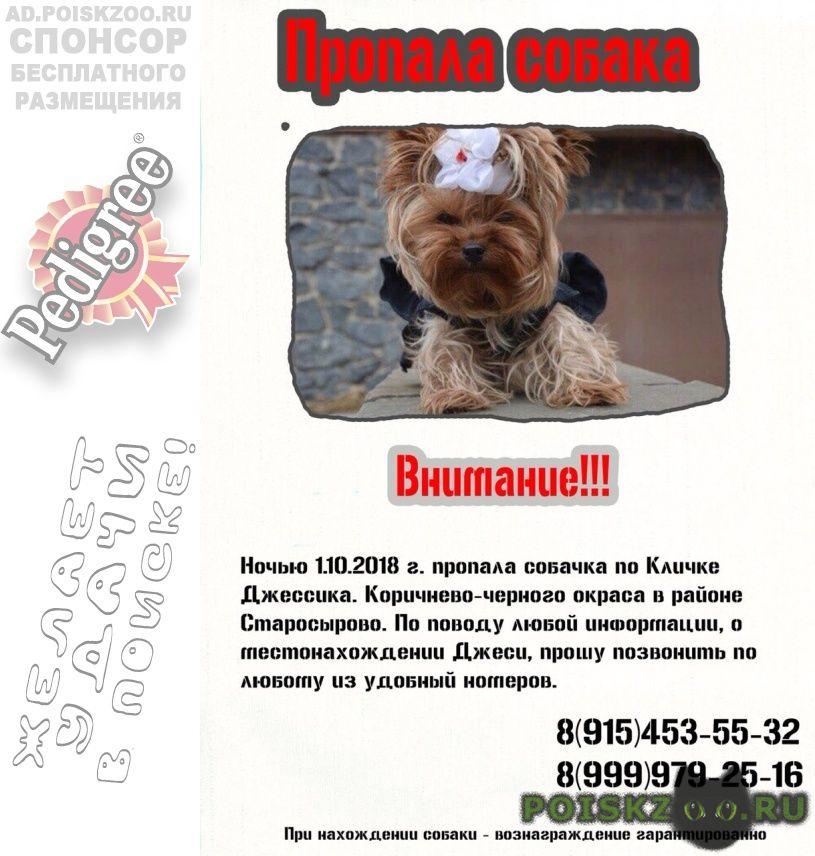 Пропала собака г.Щербинка