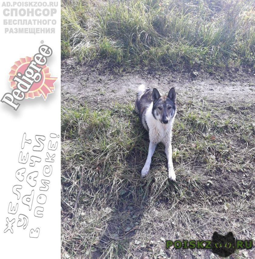 Пропала собака кобель г.Рязань