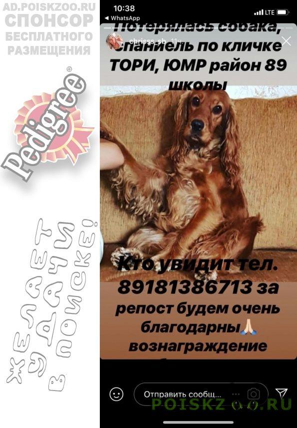 Пропала собака на юмр вчера г.Краснодар