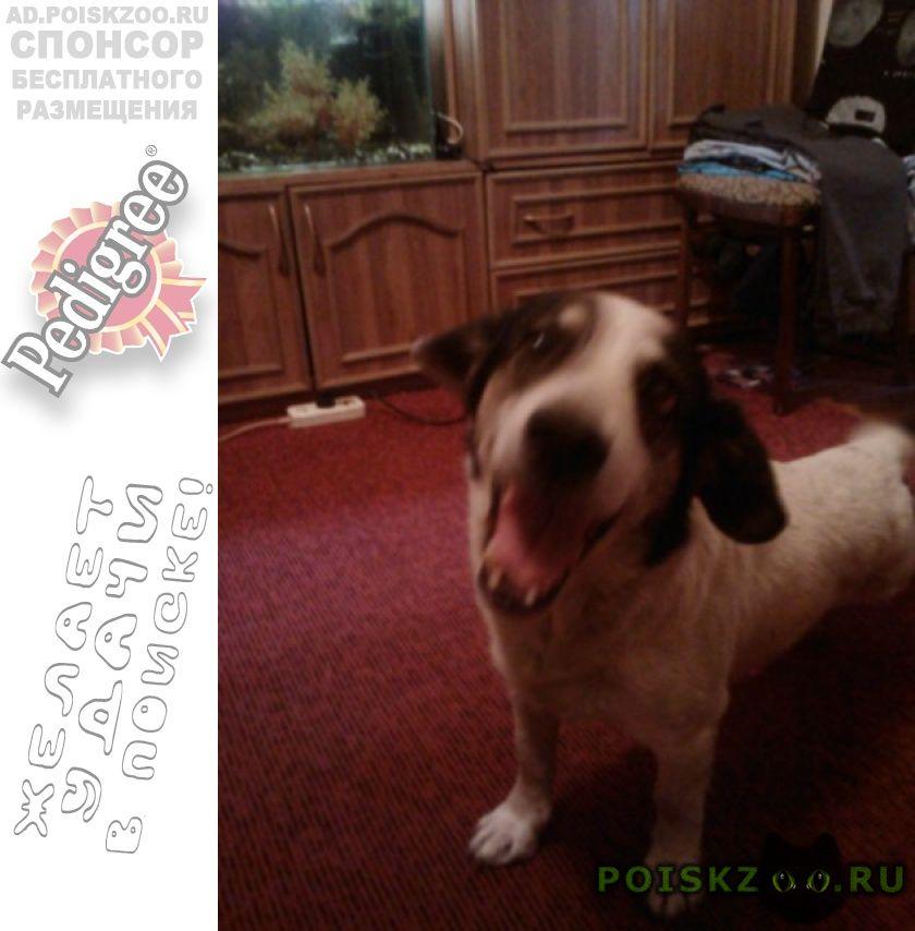Пропала собака кобель пес, белый с черными пятнами. г.Ростов-на-Дону