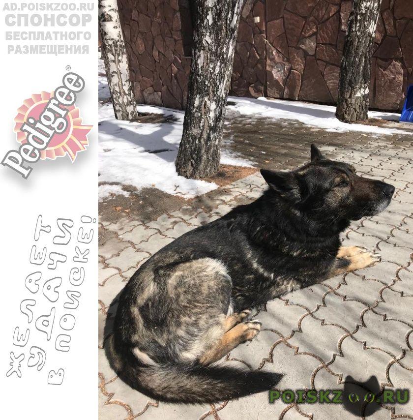 Пропала собака кобель г.Омск
