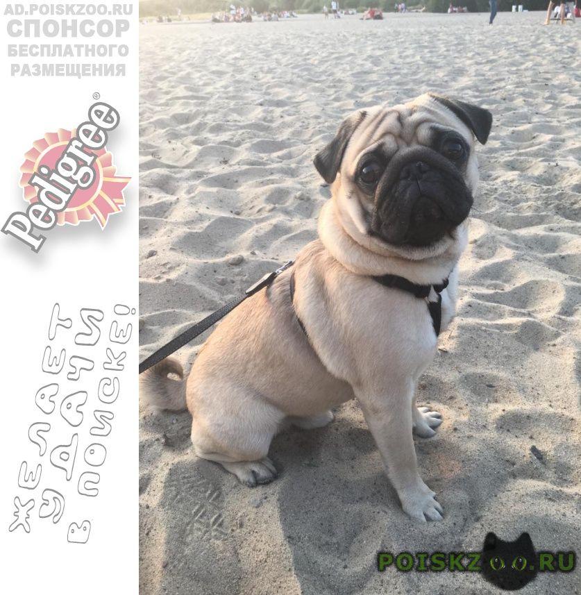 Пропала собака кобель г.Киев