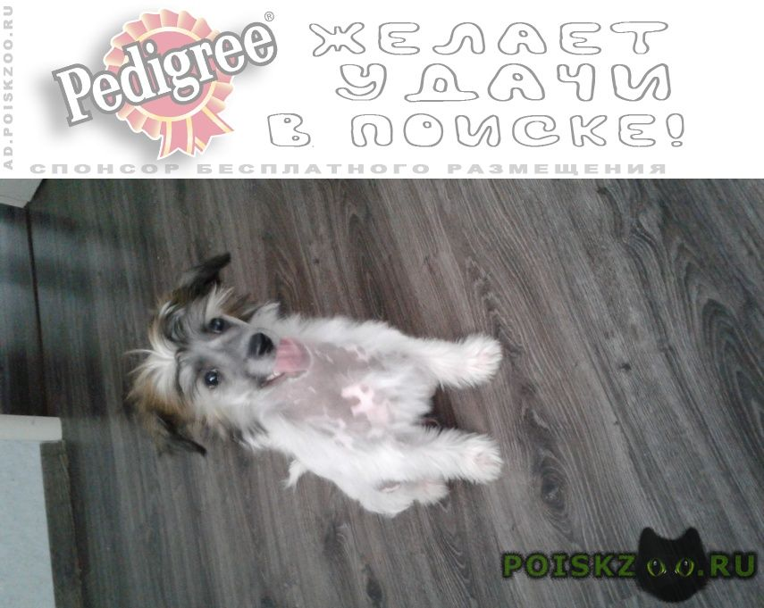 Пропала собака кобель рокки мальчик г.Пермь
