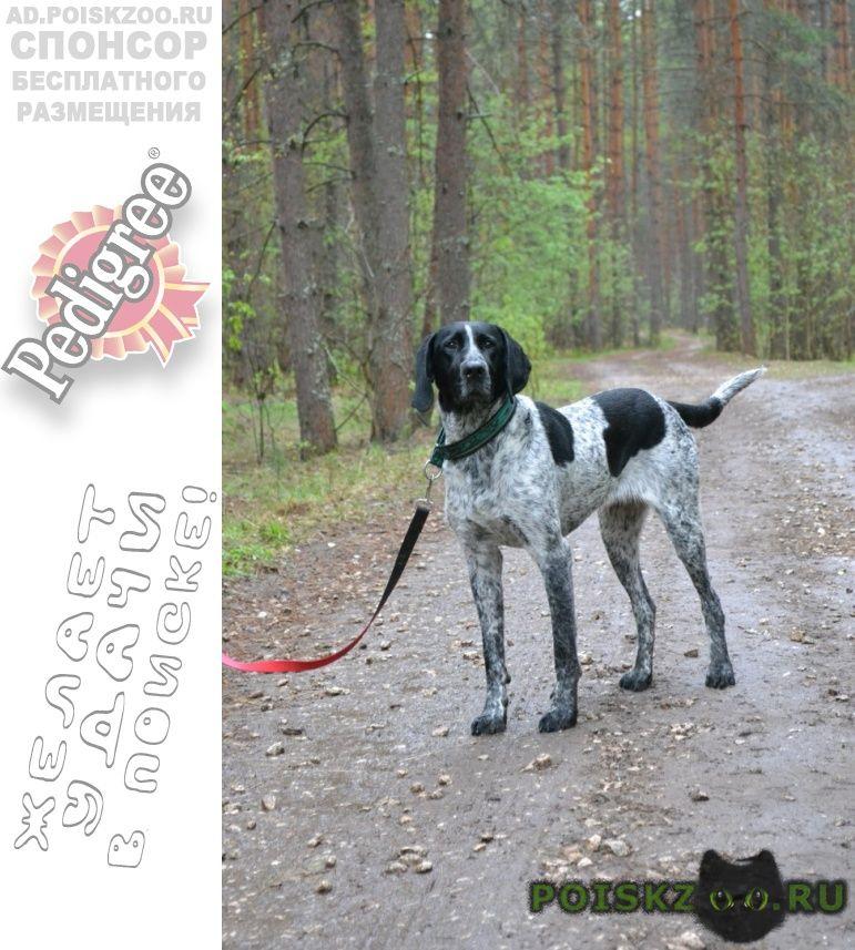 Пропала собака московская область, егорье г.Егорьевск