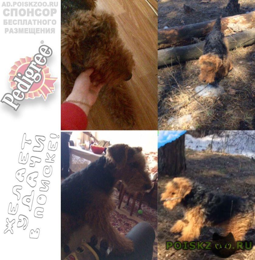 Пропала собака кобель, семилуки, вышка 28.09.18 г.Воронеж