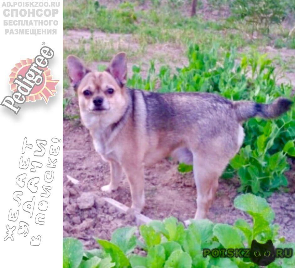 Пропала собака кобель прошу помощи за вознаграждение г.Вороново