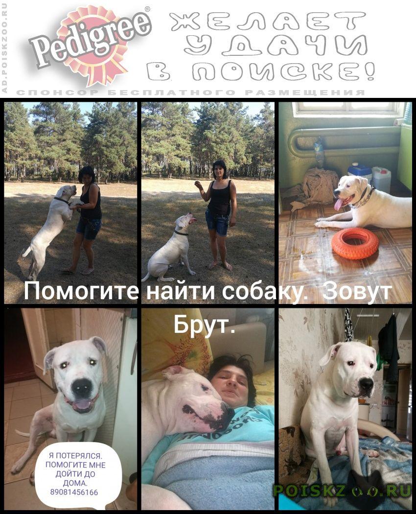 Пропала собака кобель аргентинский дог г.Воронеж