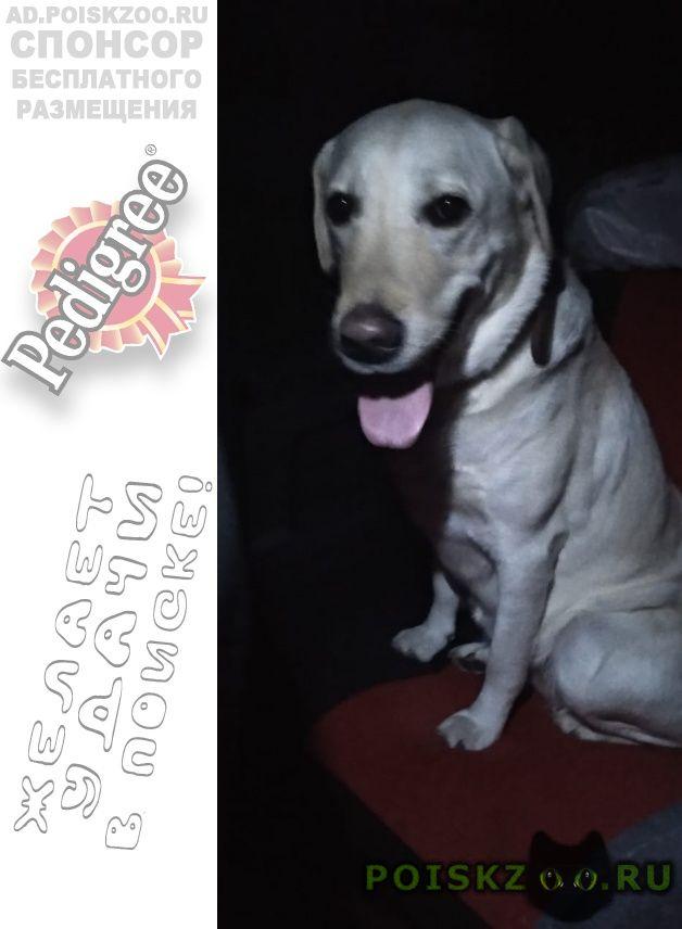 Пропала собака г.Краснодар
