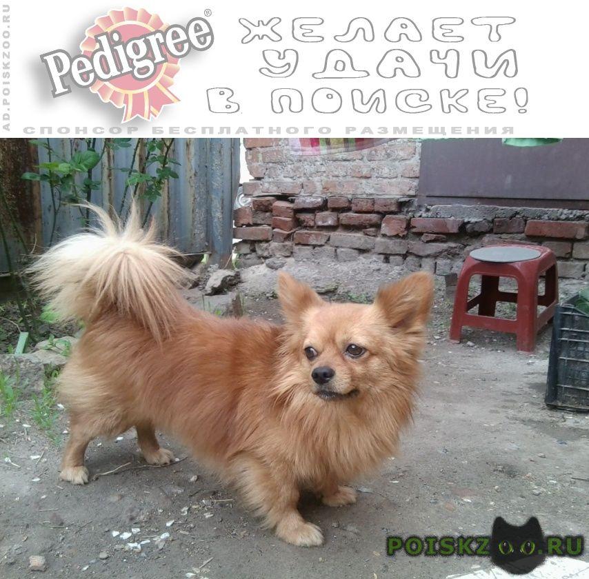 Пропала собака кобель чихуахуа г.Новочеркасск