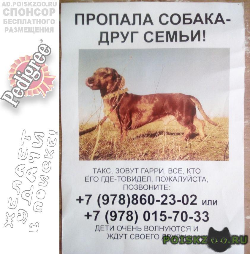 Пропала собака кобель мраморная такса г.Севастополь