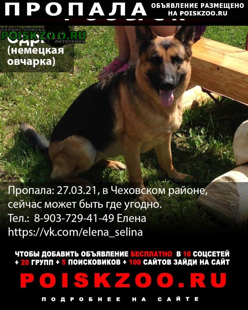 Чехов Пропала собака немецкая овчарка, девочка 10 лет