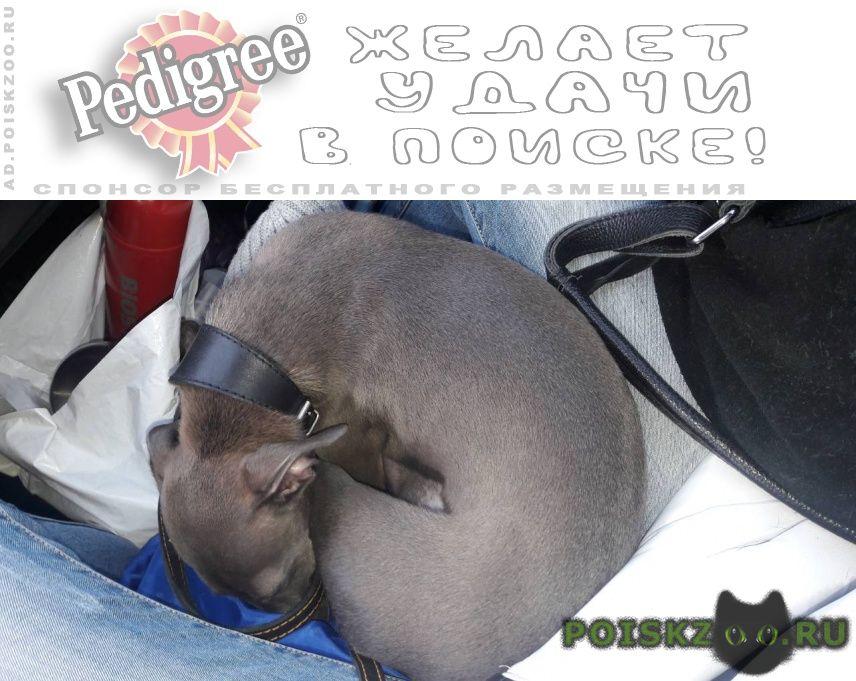 Пропала собака г.Солнечногорск