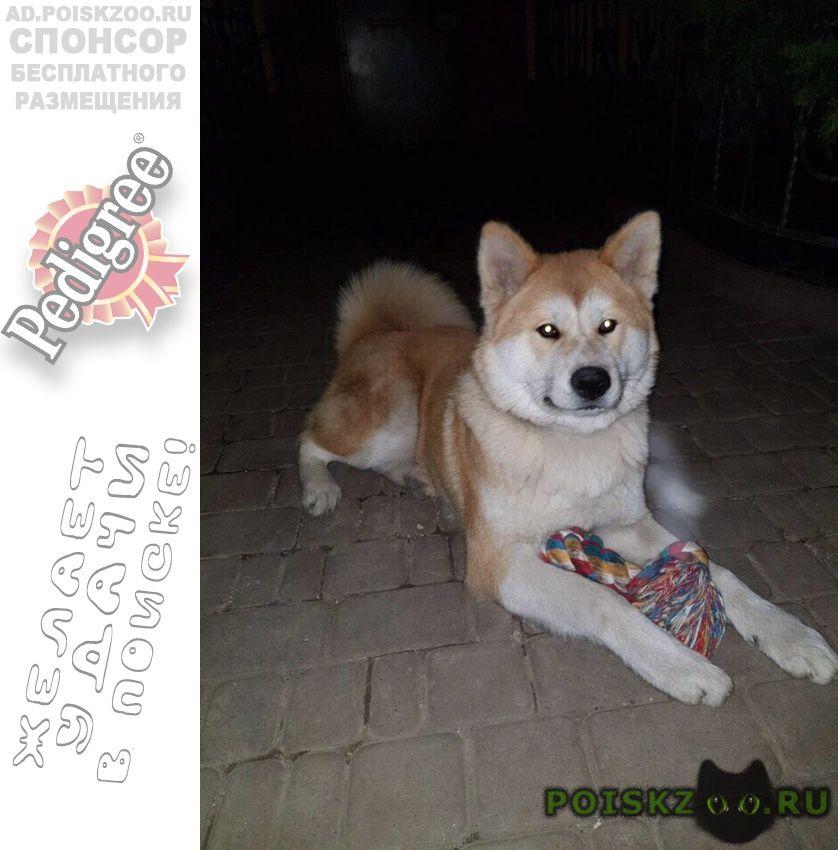 Пропала собака кобель г.Луганск