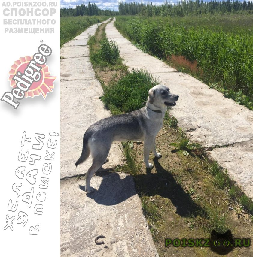 Пропала собака г.Санкт-Петербург