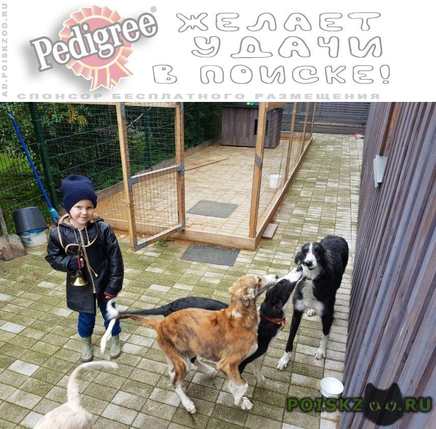 Пропала собака кобель два щенка мальчика г.Омск