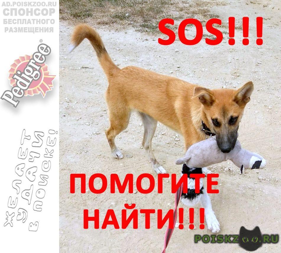 Пропала собака кобель помогите найти  г.Севастополь