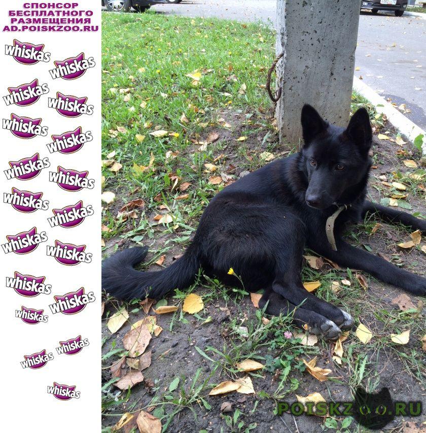 Пропала собака г.Саранск