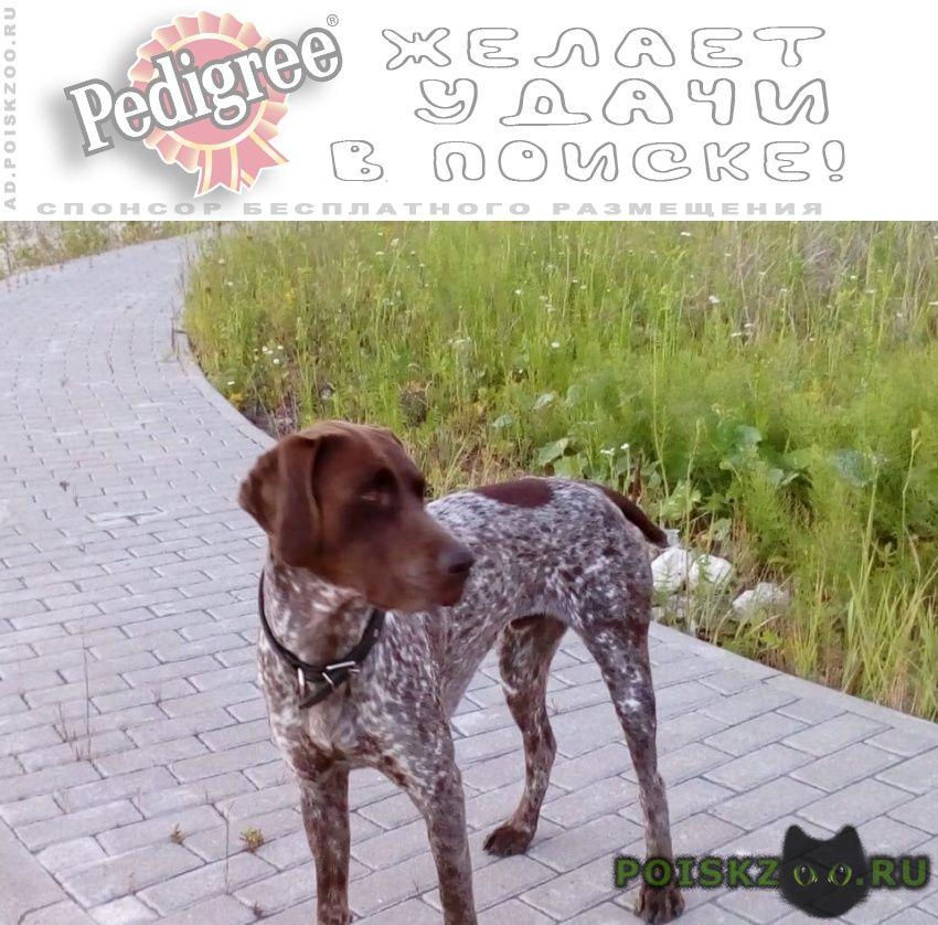Пропала собака кобель курцхаара в малахово г.Тула