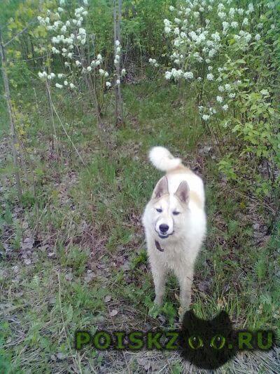 Пропала собака г.Бор
