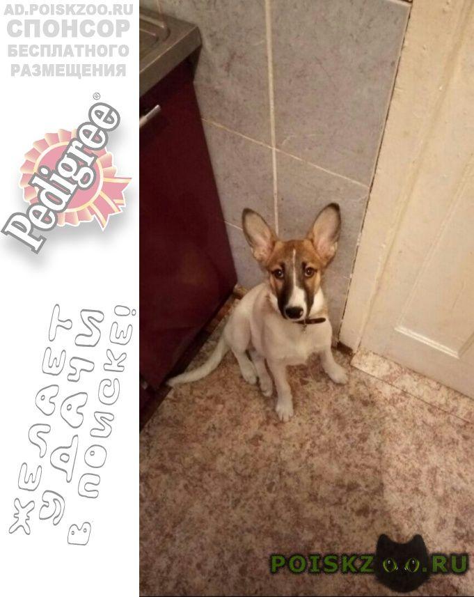 Пропала собака пожалуйста помагите найти собаку г.Екатеринбург