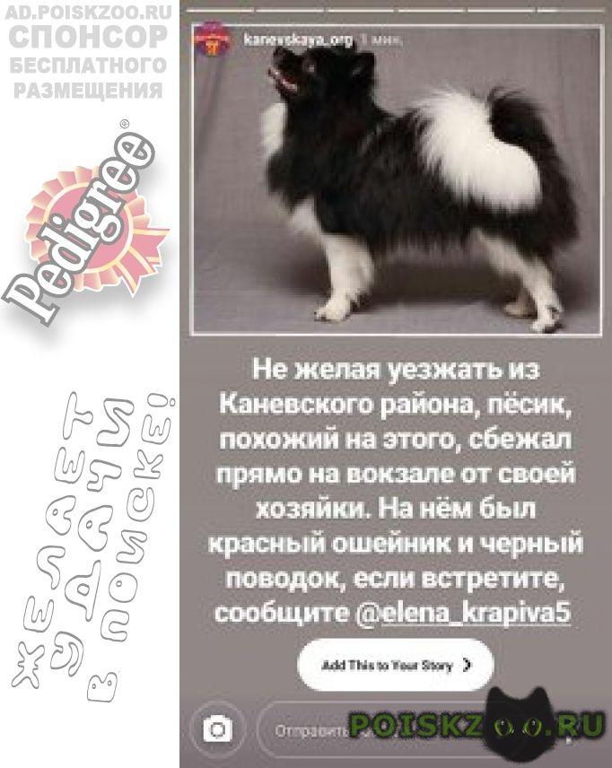 Пропала собака кобель в каневской на ж д вокзале 18 ноября г.Каневская