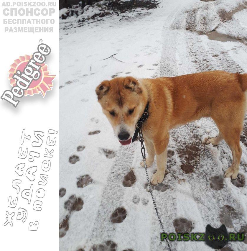 Пропала собака кобель прапала собака г.Москва