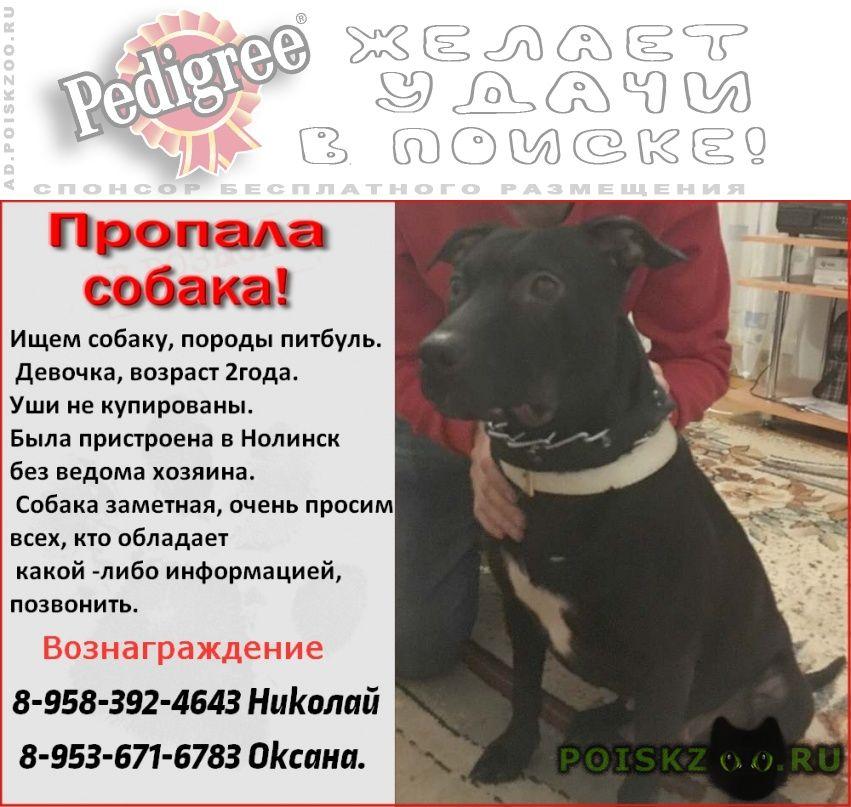 Пропала собака розыск собаки. г.Нолинск
