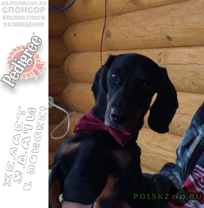 Пропала собака кобель филя г.Зеленоград
